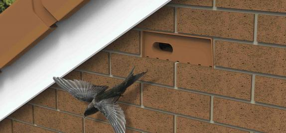 New homes for swifts - the Manthorpe Swift Brick